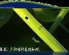 grasswaterb