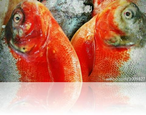fishired2