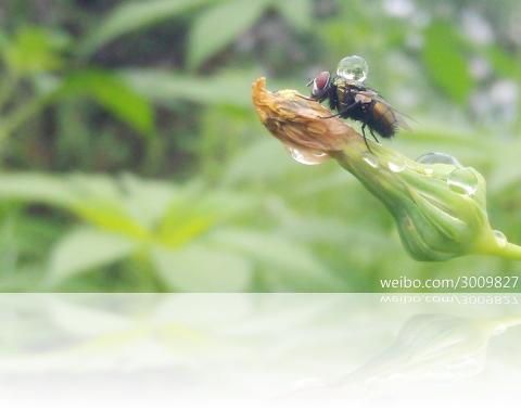 flyw1