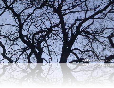 treeb
