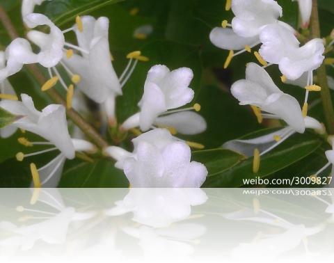 whitey201251