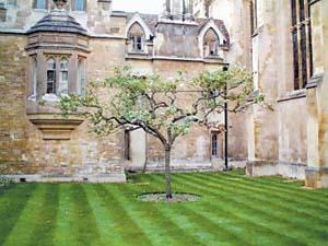 newtontree.jpg