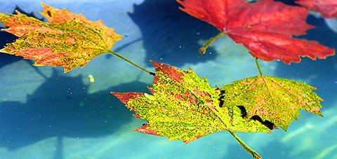 autumnn.png
